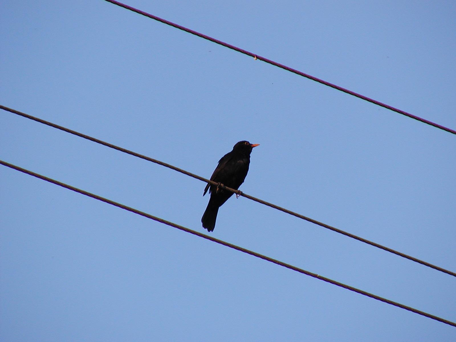 Warum elektrisiert sich ein Vogel auf der Elektroleitung nicht?
