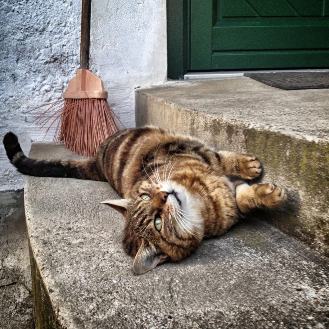 Was machte Erwin Schrödinger mit seiner Katze?