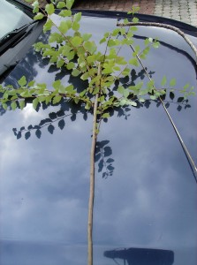 Für den Pfeil empfiehlt sich ein gerader Ast/Zweig von dem man weitere seitliche Zweige entfernt und das vordere Ende zuspitzt (in der primitivsten Form, ohne Verwendung von Steinspitzen, und Federn am hinteren Ende etc.)